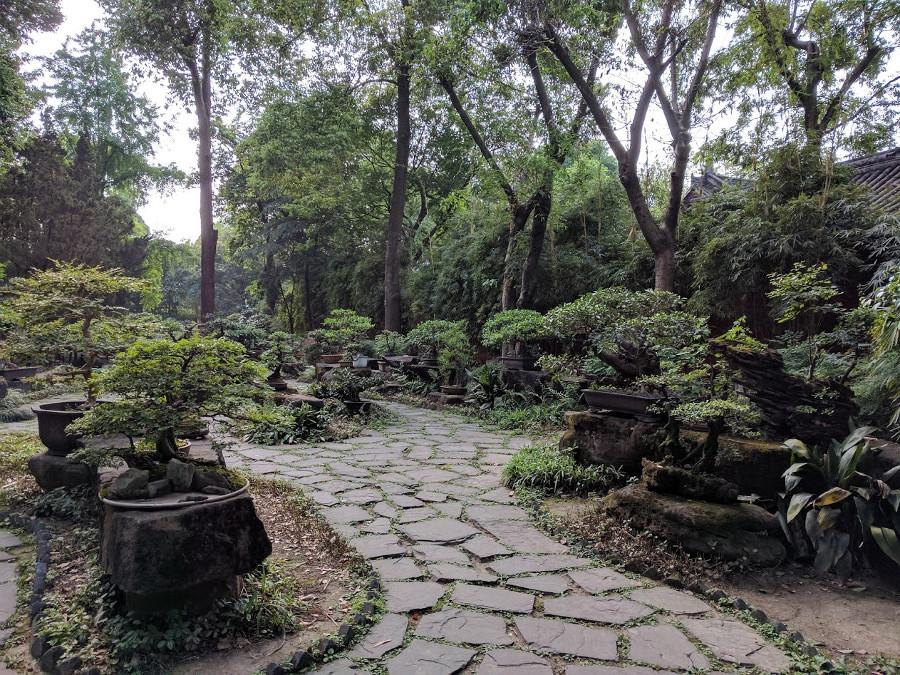 Jardin Bonsai Chengdu