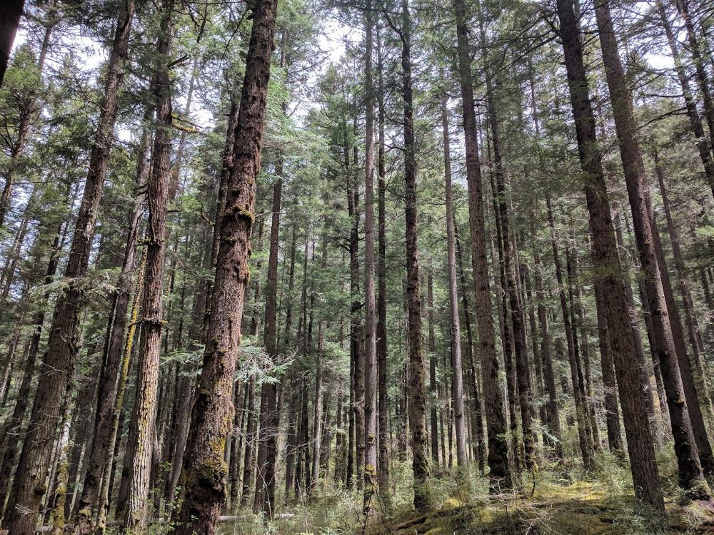 Forêt de la Vallée de Jiuzhaigou, dans le Sichuan | Chine